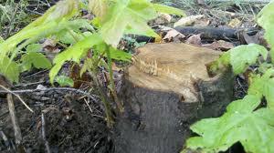 tree shoots
